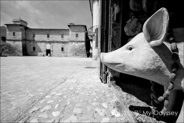 诺尔恰萌萌的小野猪在这里等你哦~