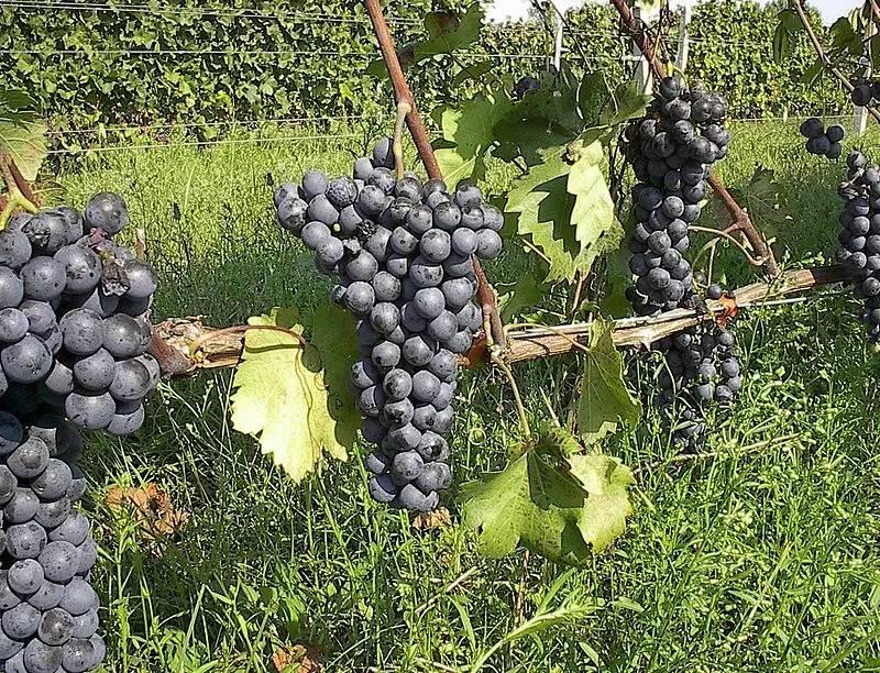 wine_17