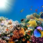 爱琴海奇幻潜水之旅 第6天