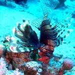爱琴海奇幻潜水之旅 第4天