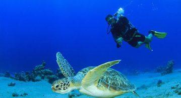爱琴海奇幻潜水之旅