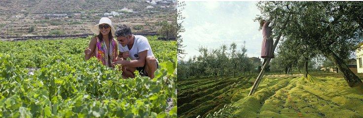 参观葡萄酒酿造厂、博物馆、葡萄种植园和橄榄种植园