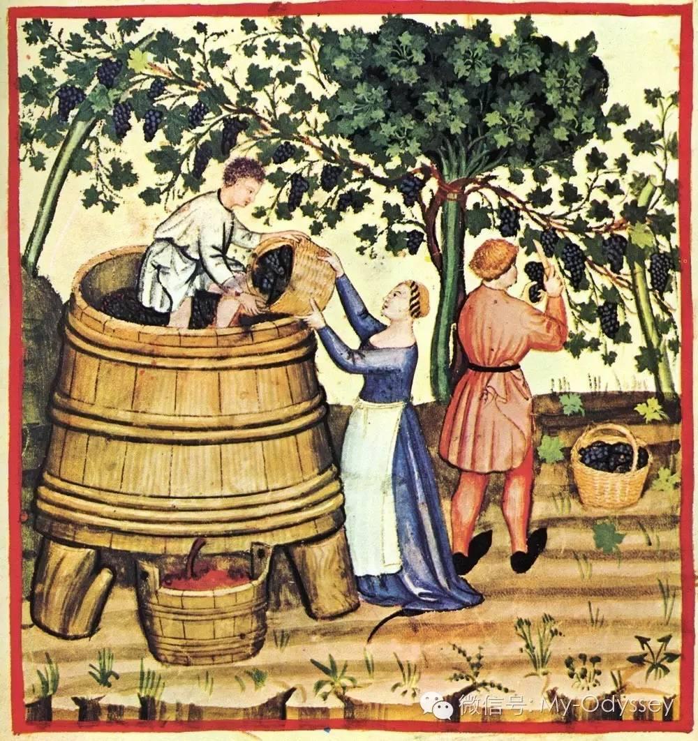 希腊的秋天脚踩葡萄酿酒