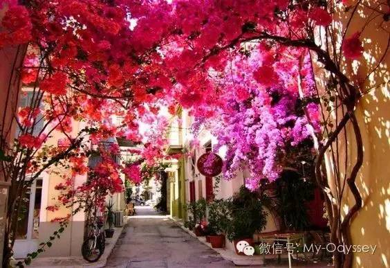 冬季希腊·新春之旅 圣托里尼-纳夫普利翁