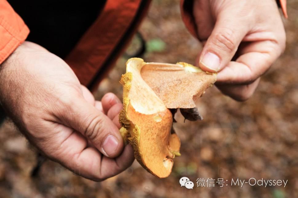 """格雷韦纳""""蘑菇狩猎""""节"""