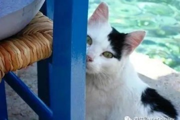 羡慕!嫉妒!这些在希腊最美的地方凹造型的喵星人