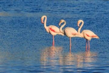 西西里岛|这里有喷溢的火山与传说,到了秋天还能看见粉色火烈鸟